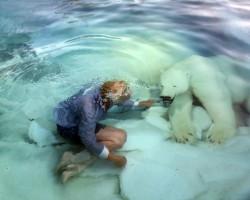TAIK_Majuria_Polar bear_2009
