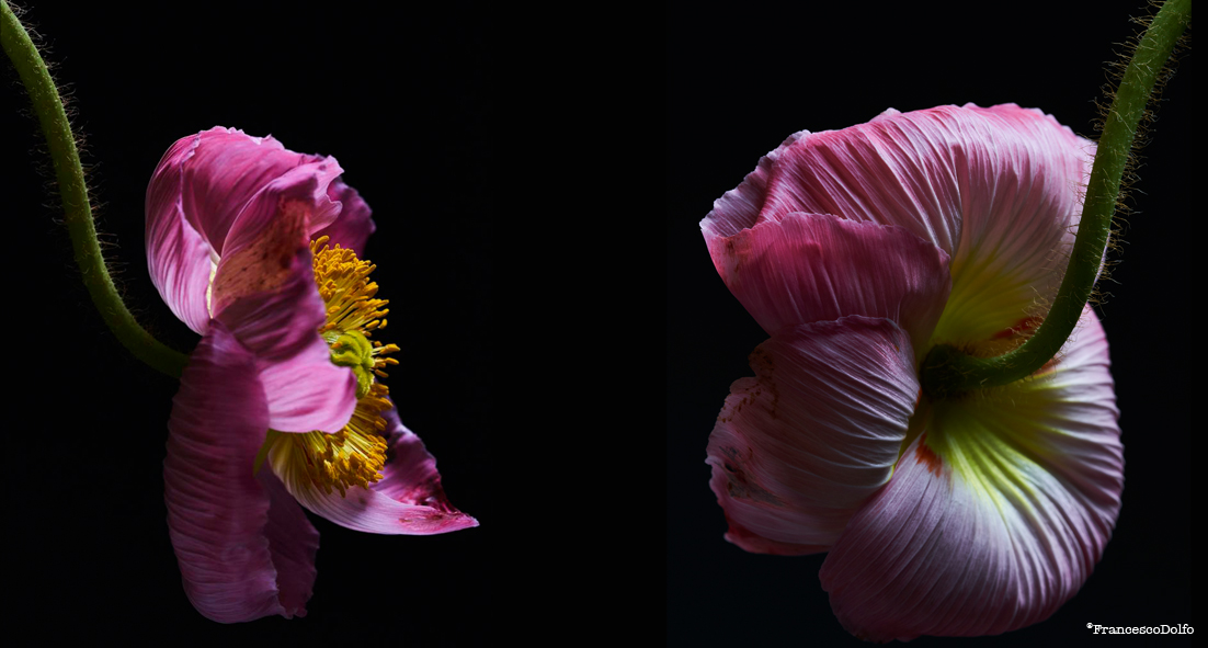 00L-Flowers.jpg