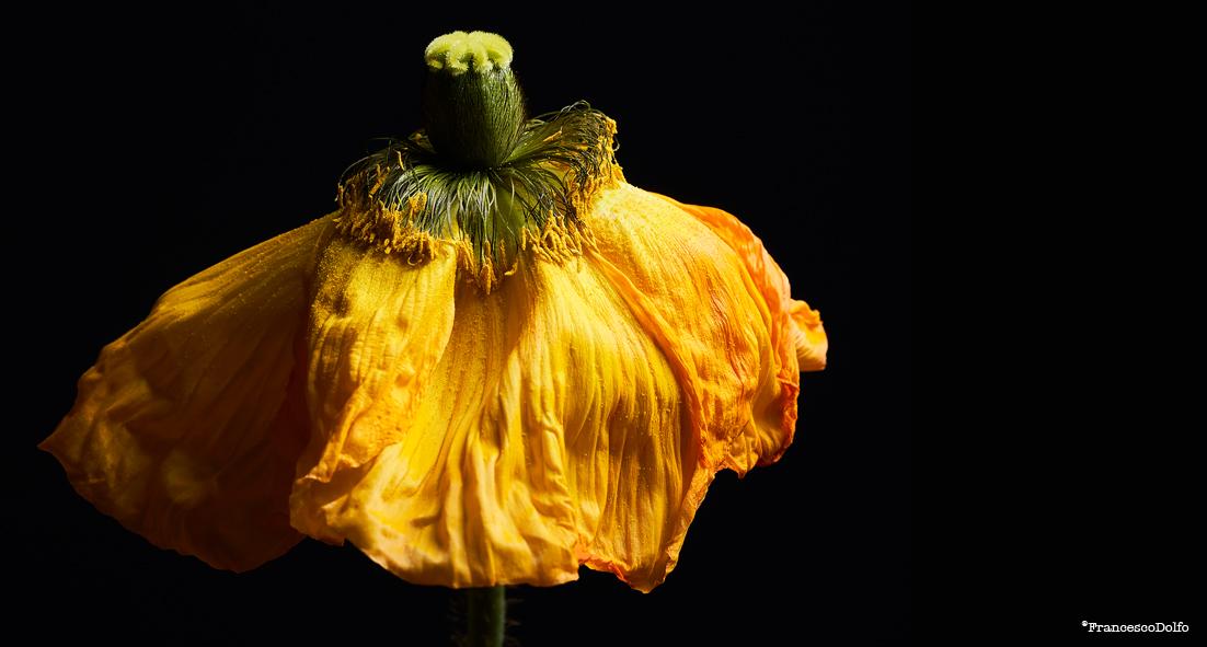 02-Flowers.jpg