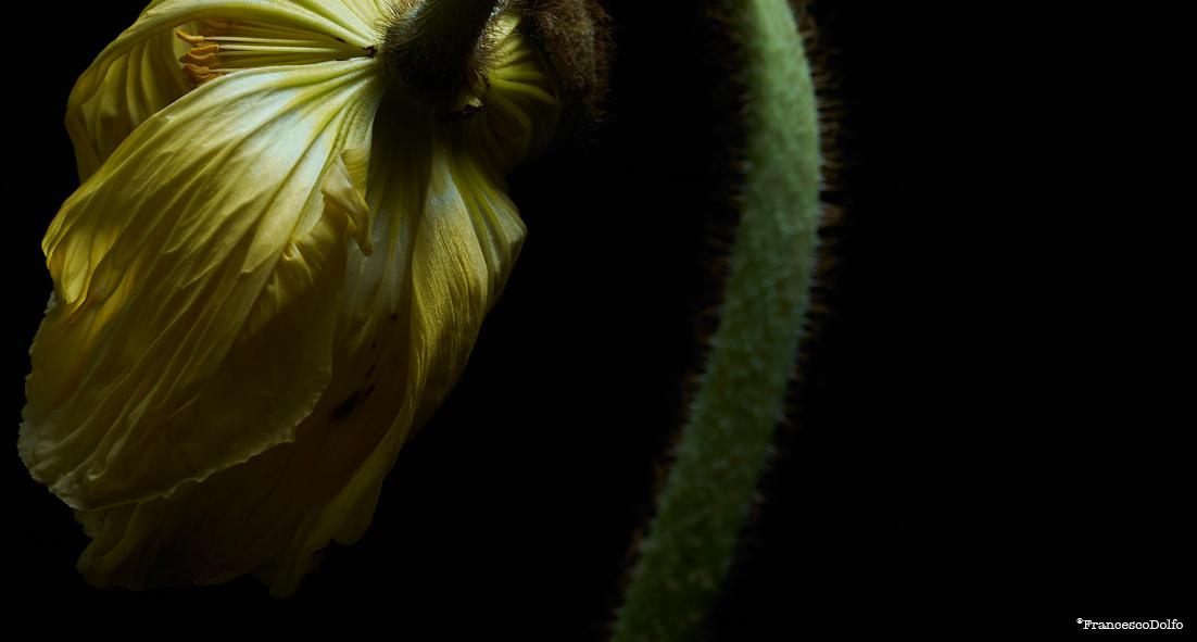 03-Flowers.jpg