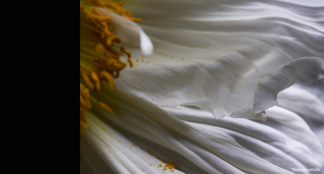 05-Flowers.jpg